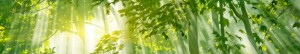 cropped-Sunlight-through-the-branches.jpg